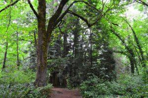 dark tree on green weowna trail