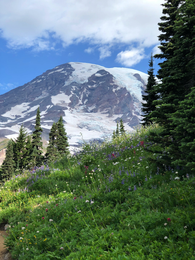 Skyline Trail view Mt Rainier