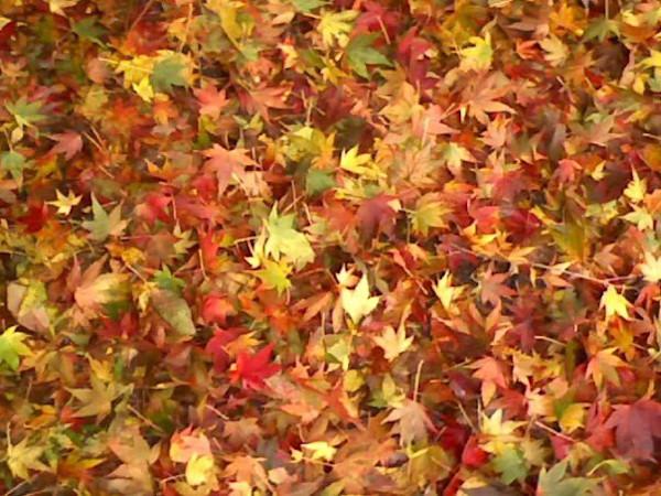 autumn favorite leaves
