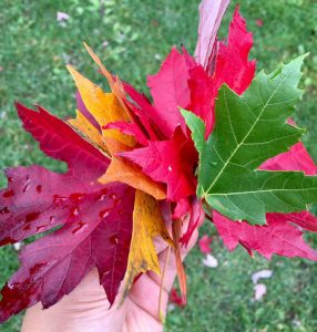 more autumn favorite leaves